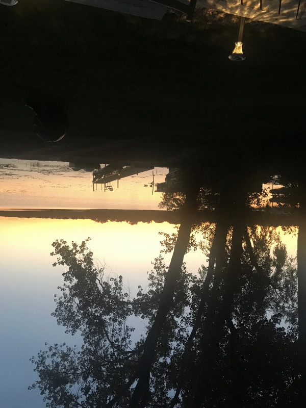an upside-down view of a lake with trees