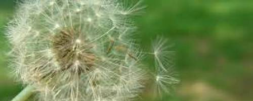 Banner Image for Manage Allergies with Massage
