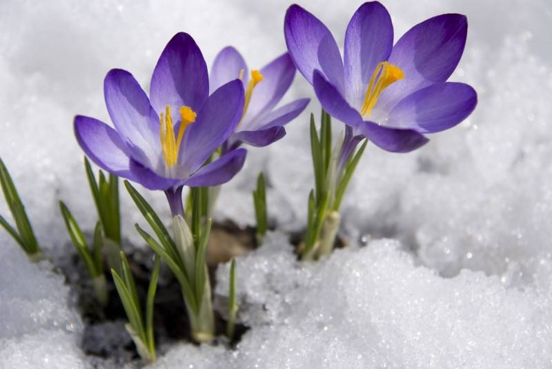 Banner Image for Spring has sprung