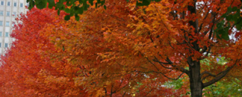 Banner Image for How Cooler Weather Affects Chronic Pain