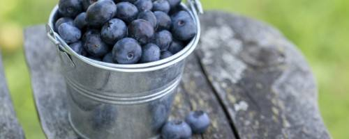 Banner Image for Make Blueberries Your Summer Superfood