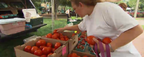 picture of a women picking fresh tomatoes at a farmer's market