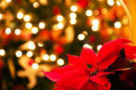 Christmas Lights and Poinsettias