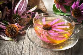 Banner Image for Echinacea Tea