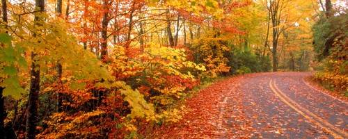 """Banner Image for """"FALL"""" INTO WELLNESS"""