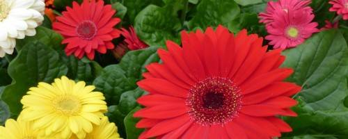 Massage Provides Pain Relief for Common Allergy Symptoms