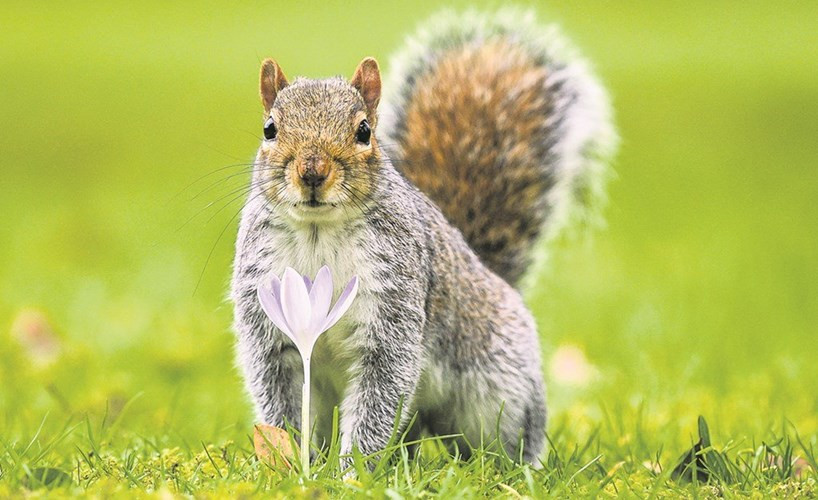 Squirrel in a field in front of a white flower