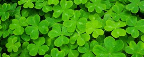 Banner Image for DIY Massage for St. Patrick's Day